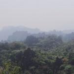 forêt de pierre