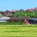 village de Jatiluwih