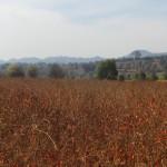 plantation de piments