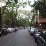 végétation urbaine