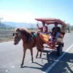 cidomo sur la route
