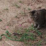 chat jouant avec un serpent