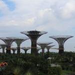 forêt de supertrees