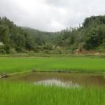 rizières et zone à poissons