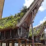 Vive les toitures végétalisées!!