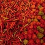 du piment (lombok) à gogo