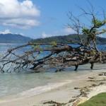 Malengue depuis sa plage