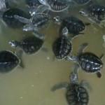 tortues de 4 mois