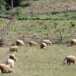 un petit air de Pays Basque