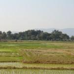 quelques rizières