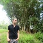 seuls les bambous sont plus grands