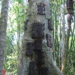 l'arbre à bébé...Cf. vidéo