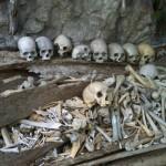 squelettes et vieux cercueil éventré