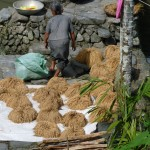riz qui sèche